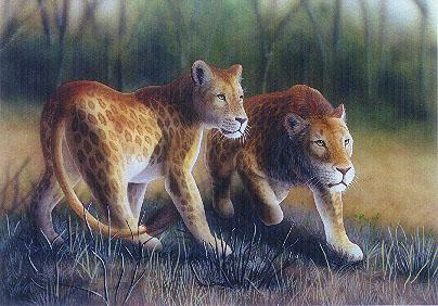 Le lion tacheté du Kenya ou Marozi Marozi